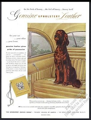 1952 Irish Setter art Tanners Council of America vintage print ad