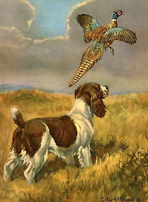 1950s Vintage SPRINGER SPANIEL Dog Print Illustration Pet Art Gallery Wall 2304