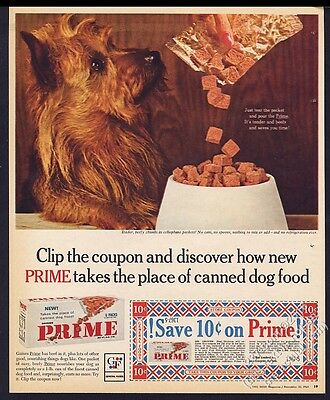 1964 Australian Terrier photo Gaines Prime dog food vintage print ad 1