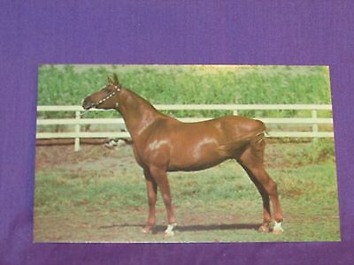 Big Red Arabian Horse Vintage Post Card To Mail, Scrapbooks or Frame Beautiful!