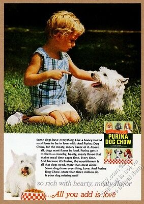 1967 Westie West Highland White Terrier photo Purina Dog Chow vintage print ad
