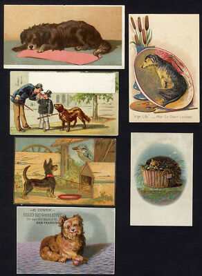 DOG Puppies Kitten 6 Victorian Cards 1880's Doghouse Cat in Basket VINTAGE ART