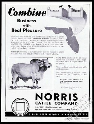 1950 Brahman Brahma bull Grand Champion photo Norris Cattle Ocala Florida ad