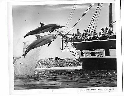 1966 PRESS PHOTO Dolphins Jumping Sea Life Park Oahu Hawaii 6886