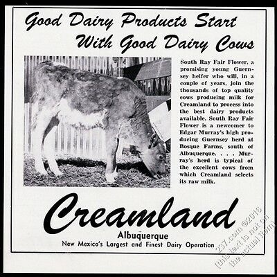1950 Guernsey cow photo Creamland milk ice cream Albuquerque New Mexico print ad