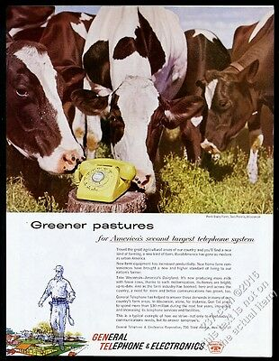 1959 dairy cow cattle herd Sun Prairie Wisconsin photo GTE vintage print ad