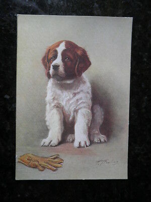 "Antique Dog Postcard ""st.bernard"""