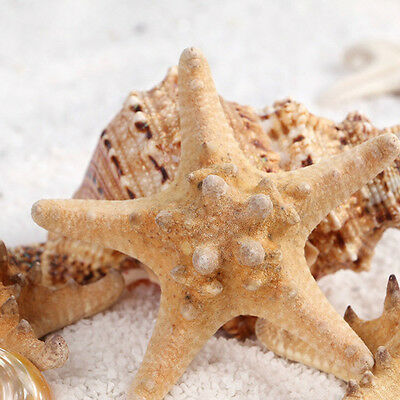 2/10pcs 4cm Natural Starfish Shell Star Landscape Beach Weddings Decor Craft DIY