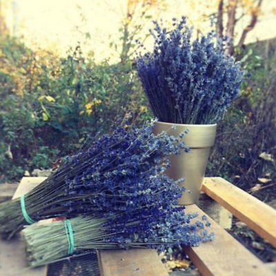 Bunch of Natural Lavender Dried Flower Bouquet 100 Stems Fragrant Wedding Decor