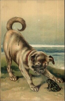 Sweet Pug Puppy Dog Playing w. Frog c1910 Embossed Postcard