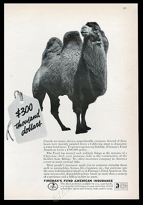 1964 Bactrian camel photo Fireman's Fund Insurance vintage print ad