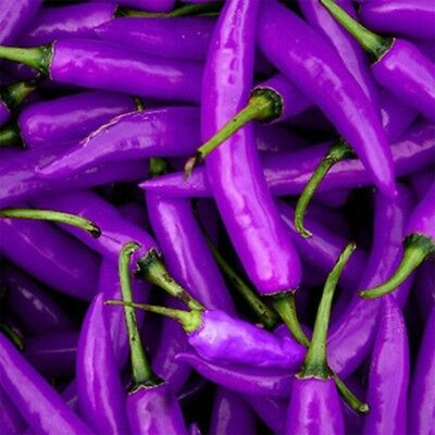 100Pcs/Pack Purple Chilli Pepper Cayenne Seeds Organic Home Garden Vegetable