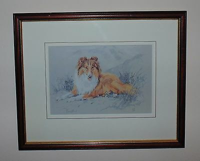 Rough Collie Limited Edition Print by UK Artist David Harrison Signed Picture