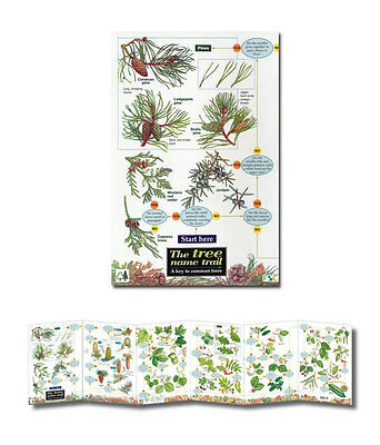 Field Guide The Tree Name Trail Laminated Identification Chart Poster