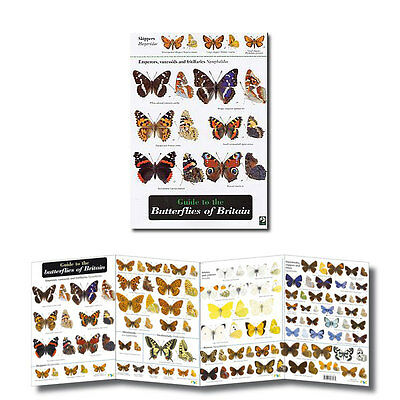 Guide Butterflies of Britain Laminated Identification Chart Field Guide Poster