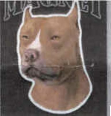 Large Car Magnet PITBULL discontinued CLEARANCE PRICE