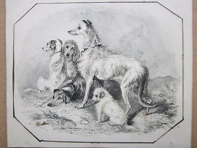 """ANTIQUE DRAWING c.1853 - """"I.A.T"""" - IRISH WOLF HOUND & GROUP OF OTHER DOGS"""