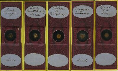 Set of 5 Plant Seed Paper-Wrapped Microscope Slides