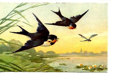Pretty Pair of Bluebirds-Dragonfly over Water Drawing-Vintage Artwork Postcard