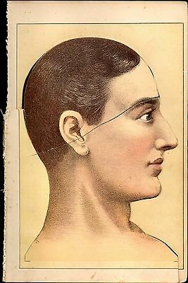 Human Head Anatomy Overlay Diagrams 1892