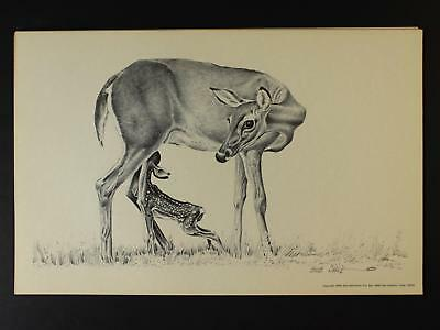 LOT of 8 1976 WESTERN ARTIST BOB DALE 11 x 17 PRINTS of WHITE TAIL DEER & FAWN