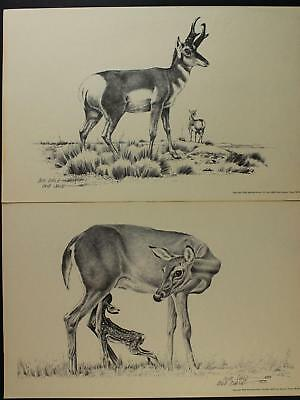 LOT: TWO 1976 WESTERN ARTIST BOB DALE 11 x 17 AUTOGRAPHED PRINTS~ANTELOPE~DEER