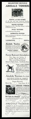 1907 Airedale Terrier champion dog photo breeders vintage print ad