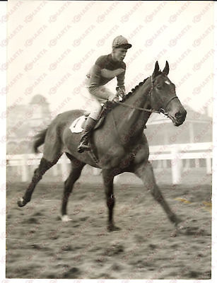 1956 LONDON Training of QUARE TIMES trained by Pat TAAFFE *Photo 15x20