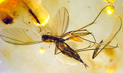 Fossil Insect In Baltic Amber 45-55 Millions Years Old(7618 )