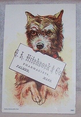 Pre-1900's Trade Card-G L Hitchcock & Co-Pharmacists-Palmer Mass-Dog-Terrier