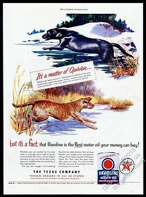 1951 Chesapeake Bay Retriever and Black Lab Labrador art Texaco oil print ad