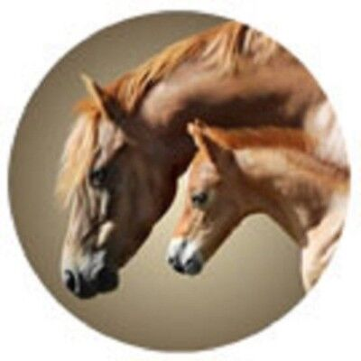 Vinyl MARE & FOAL Horse Round Car/Truck Magnet