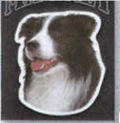 Large Car Magnet BORDER COLLIE discontinued CLEARANCE PRICE