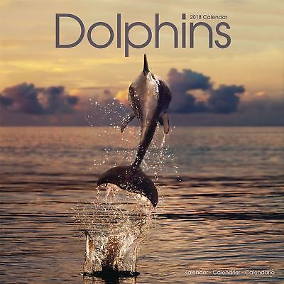 Dolphins Official 2018 Square Wall Calendar