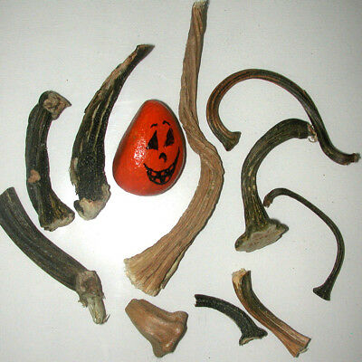 "10 PUMPKIN STEMS CLEANED DRIED MIXED LOT PUMPKIN STEMS 1 1/4 "" to 6""  #p20"
