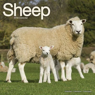 Sheep Official 2018 Square Wall Calendar
