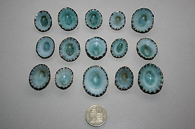 SELECTED 15 'Turquoise' blue Limpet seashells