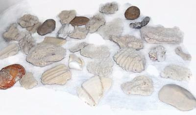 1.5 Old Collection of Coral Fossils Pieces - Wisconsin Estate Find