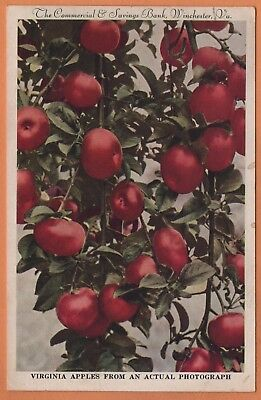 VA Virginia Winchester Commercial Savings Banks Apples Frederick County Postcard