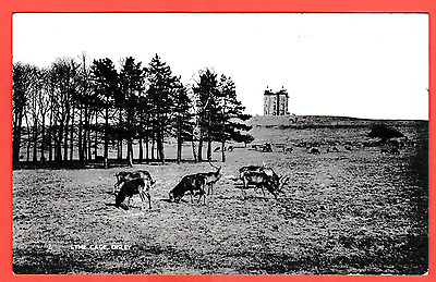 Dated 1917. Deer at Lyme Cage, Disley, Stockport, Cheshire