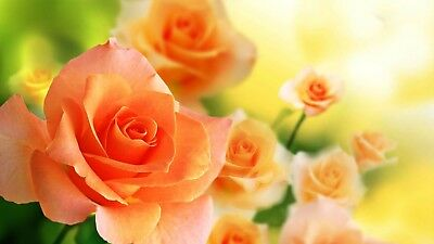 Orange Climbing Rose Bare Root Plant Scented Flowers, Quality Roses