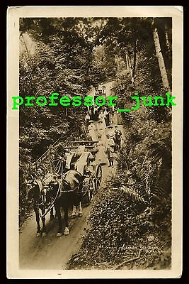 GRASMERE Red Bank WESTMORLAND - Abraham of Keswick RP Postcard CUMBRIA Ambleside