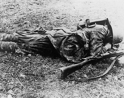 Dead German Sniper with Rifle Western Front World War I WWI 8x10 Photo
