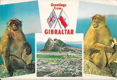 Gibraltar - Greeting from  - Posted Postcard 1965