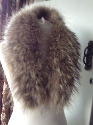 Vintage Racoon Collar Glam Up A Coat