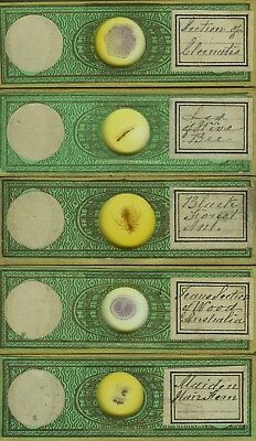 5 Insect & Plant Microscope Slides by Amos Topping