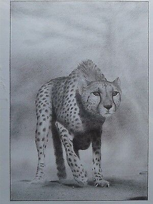 """"""" Cheetah """" Gepard Africa photo realistic animal pencil drawing from Hungary"""