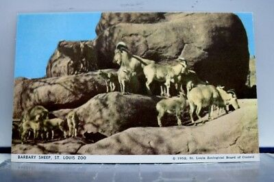 Missouri MO St Louis Zoo Barbary Sheep Postcard Old Vintage Card View Standard