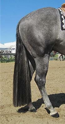 "New DARK GREY 1/2 pound Horse Tail Extension 35"" by KATHYS TAILS USET & FEI apvd"