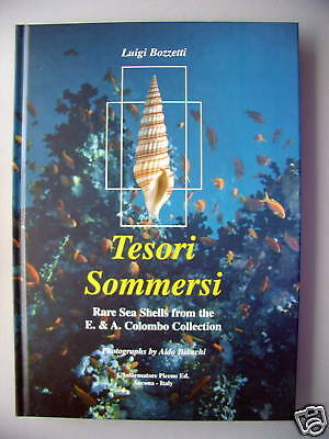 Tesori Sommersi Rare Sea Shells from Colombo Collection